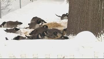 Wildlife sanctuary extra busy helping animals