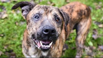 Adopt-A-Pet: Meet Loki and Rocco!