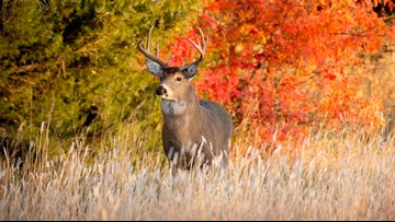 Michigan hunters head out for 2018 firearm deer season