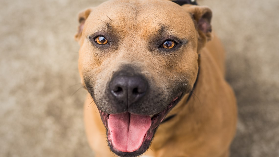 Finding Furever Homes: Empty the Shelters begins May 5