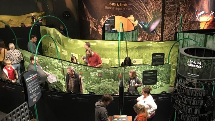 New GRPM pollination exhibit features interactive maze