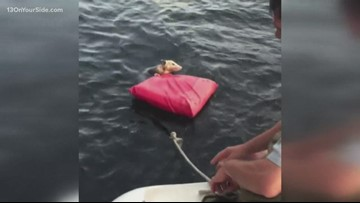 Exhausted opossum saved in the lake