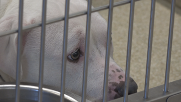 West Michigan animal shelters struggle with coronavirus effects