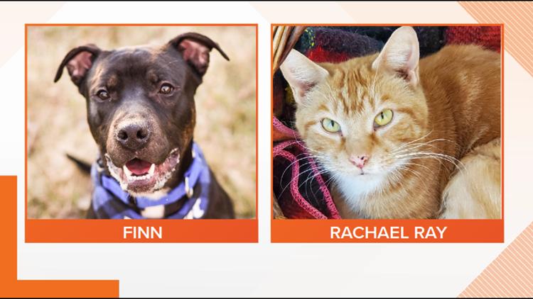 Adopt-A-Pet: Meet Finn and Rachael Ray!