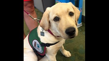 CJ, the WZZM 13 Paws with a Cause puppy, turns 1 year old!
