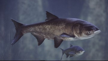 States, provinces discuss cooperation on stopping Asian carp