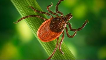 VERIFY: Debunking Lyme disease myths