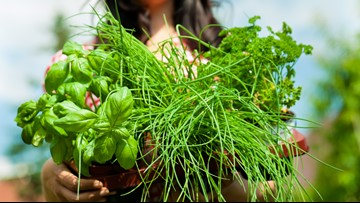 Committee helps teach about edible landscaping in the city