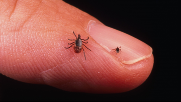 Everything you need to know about preventing tick bites
