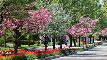 Holland wins national America in Bloom award
