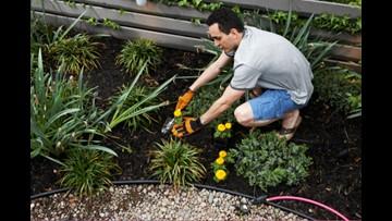 Greenthumb: Having a diverse landscape