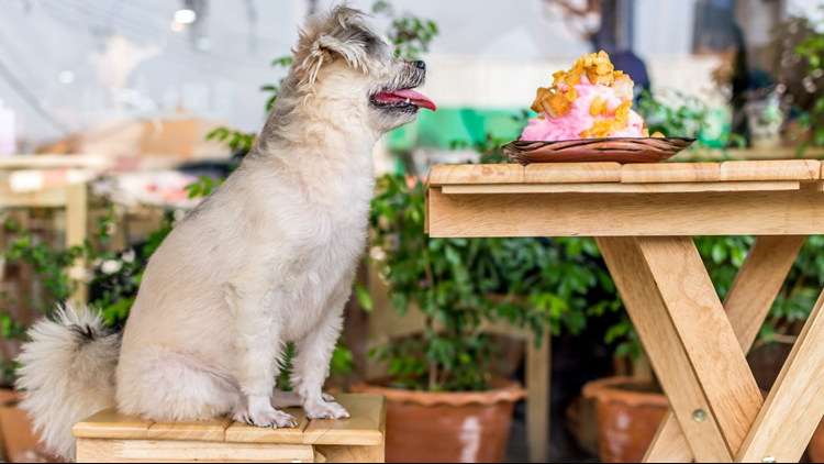Michigan bill could allow dogs to dine with their owners in outside spaces