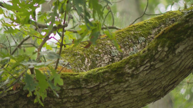 The 'Hanging Tree.'