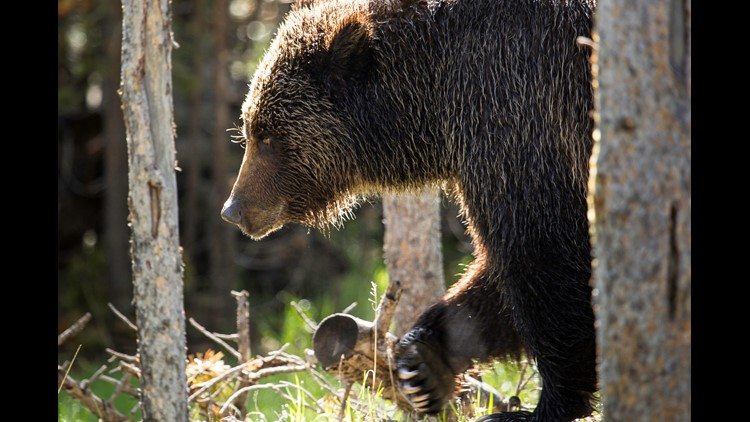 Man mauled to death after attempting to take selfie with bear