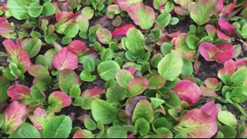 Our Greenthumb expert shows you how to harness the colors of fall