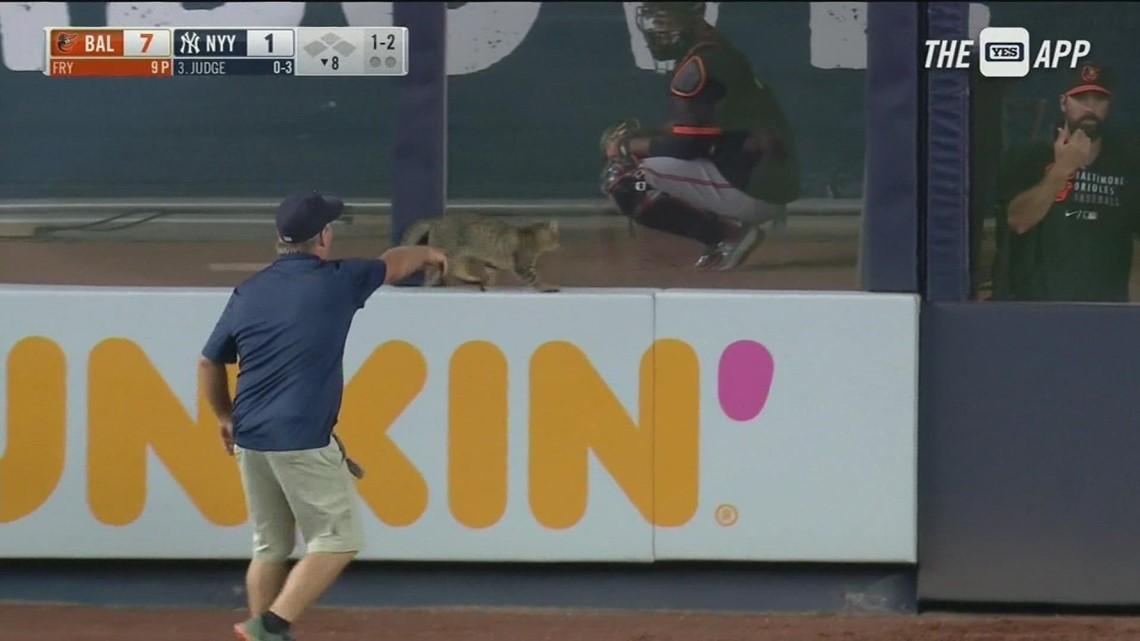 MUST SEE: Stray cat runs around Yankee Stadium, delays game