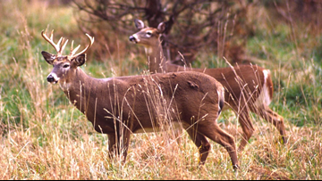 DNR: Do not eat deer taken near contaminated former Wurtsmith Air Force base