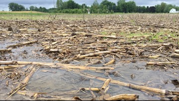 Some area farmers just won't plant corn this year