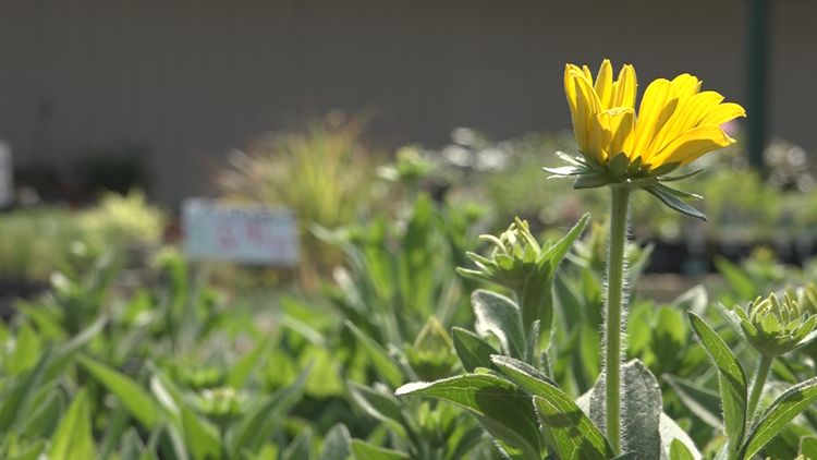 Muskegon garden center hit by string of burglaries