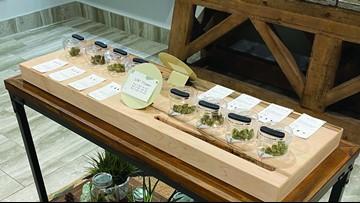 Recreational marijuana dispensary opening in White Cloud