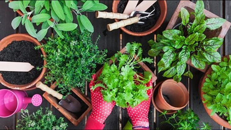 Create a lasting container garden