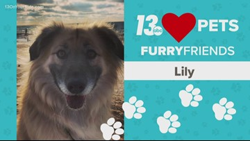 13 Loves Pets: Lily, lover of walks