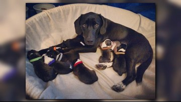 Hearts of Hope dog welcomes 8 puppies; naming rights offered to local pizzerias