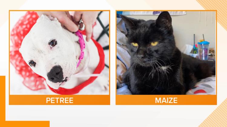 Adopt-A-Pet: Meet Petree and Maize!