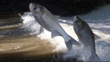 Snyder sends letter to Illinois to help pay to block Asian carp from Great Lakes