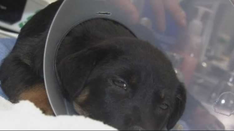 Cops: Man abused puppy, set up fundraiser to pay vet bills
