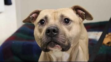 Event raises money for the Muskegon Humane Society