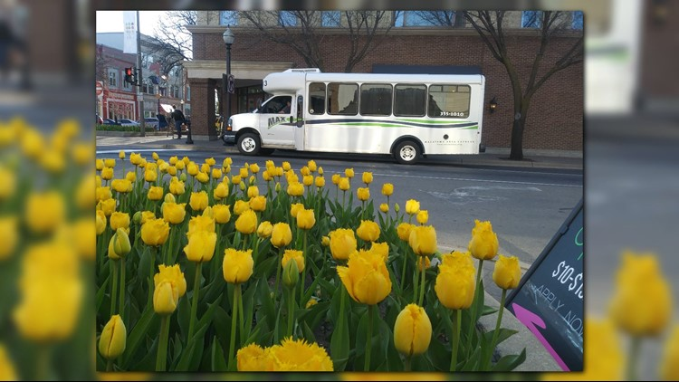 Tulip Time organizers offer tips to get the best experience