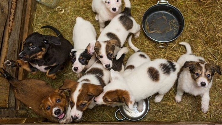 "Bills that would ban pet stores from purchasing dogs from ""puppy mills"" was approved by the House Agriculture Committee and moves forward to the House of Representatives."