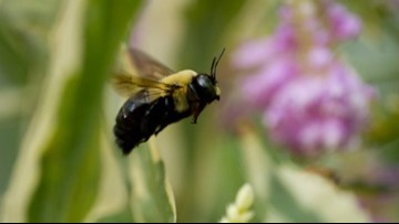 Made in Michigan: 'Sister Bees' beauty products are buzzing with growth