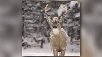 Bucking the trend: Firearm deer season should start before Nov. 15, lawmaker says