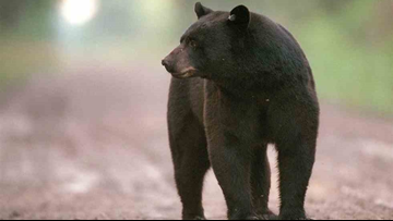 DNR suggests taking down your bird feeders to avoid bears in your neighborhood