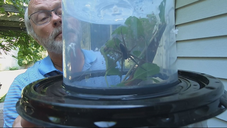 Bob McAndrews hunts for, captures and studies many different species of spiders.