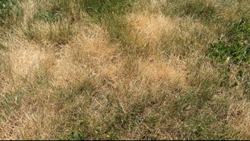 Greenthumb: The best time to reseed the lawn
