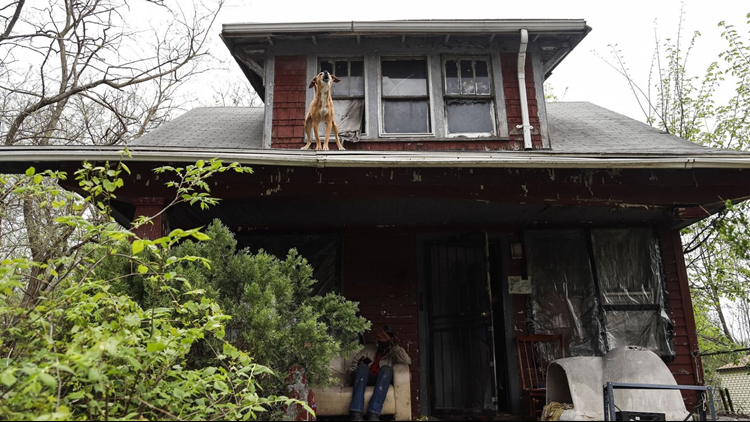 Dead Bodies Wild Dogs Squatters In Government Owned Detroit Houses