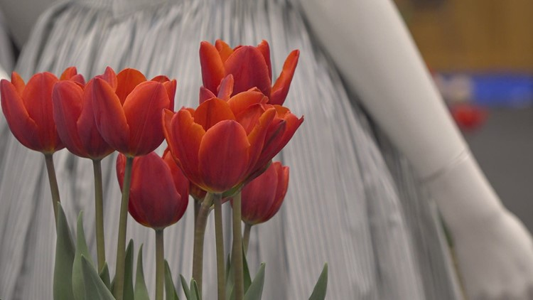New Tulip Time event highlights Dutch culture in exhibit experience