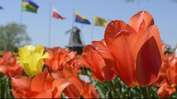 Tulip Time canceled for the first time in 91 years