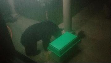 Black bear kills family bunny in Whitehall-area overnight