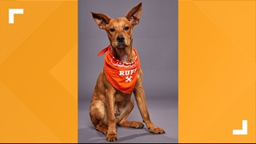 A shelter puppy from Michigan will compete in Puppy Bowl XVI