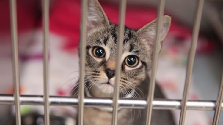 Bissell Pet Foundation launches emergency Empty the Shelters event