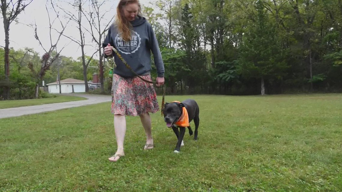 Adopt-a-pet: Meet Silas, Kayla & Franklin at Hearts of Hope Rescue