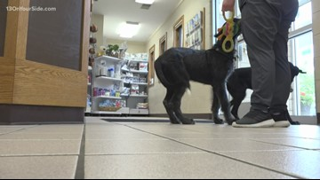 Grand Haven animal hospital shutting down late-night service