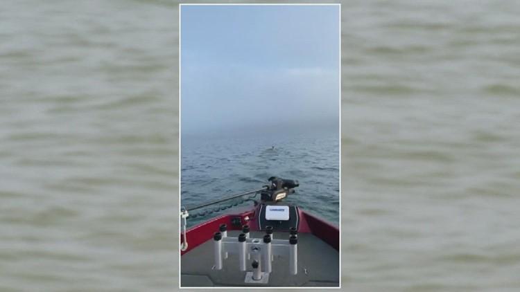 'OH DEER!': Lake Michigan fishermen save Milwaukee-bound buck