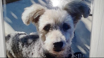 Who shot Tigger? Family looks for answers after dog was 'executed'