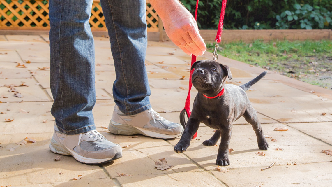 480abc2a8d3f7 » Sit. Stay! Puppy training tips from Paws With A Cause – WZZM13.comThe  Doggy Blogger