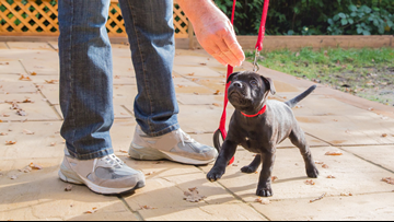 Sit. Stay! Puppy training tips from Paws With A Cause
